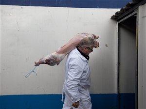 Un agneau destiné au marché halal.