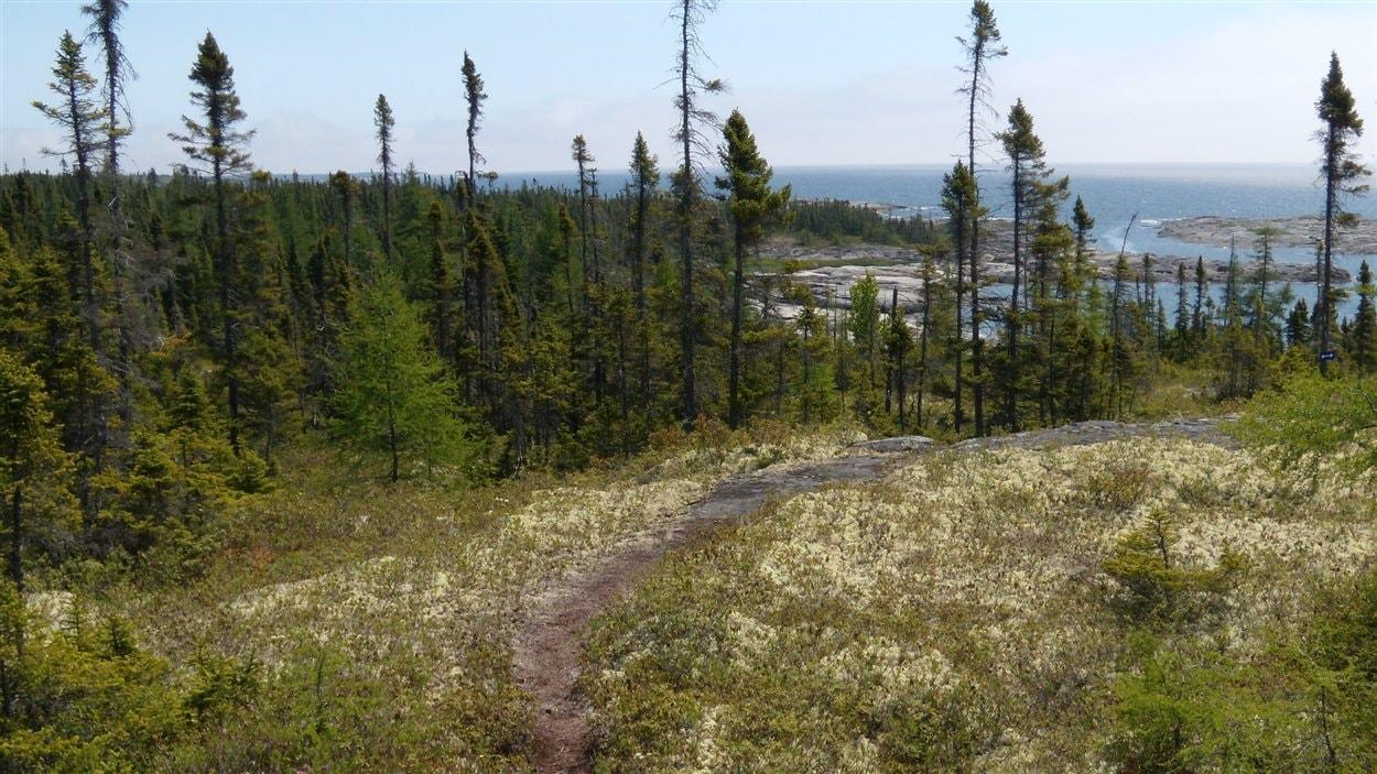 Forêt sur la Côte-Nord