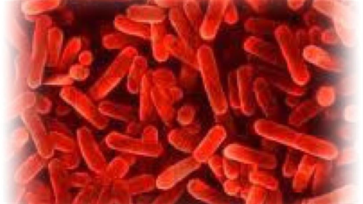 La bactérie à l'origine de la maladie du légionnaire