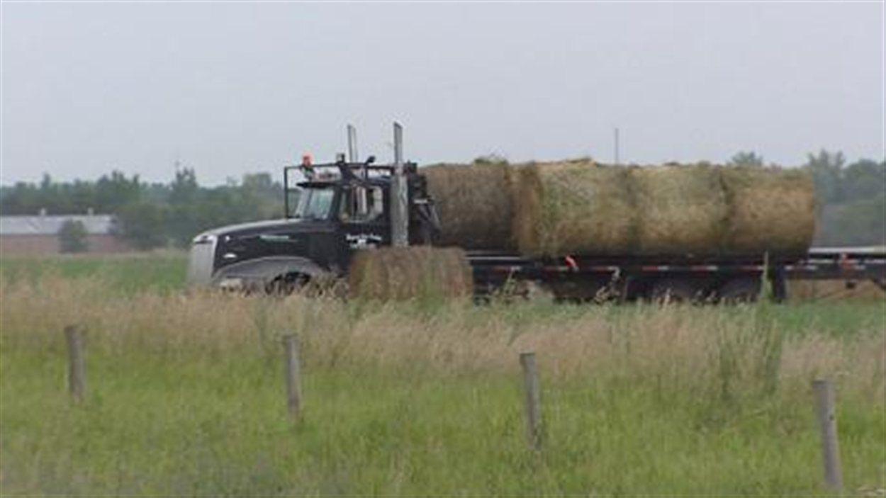 Hay East foin Saskatchewan