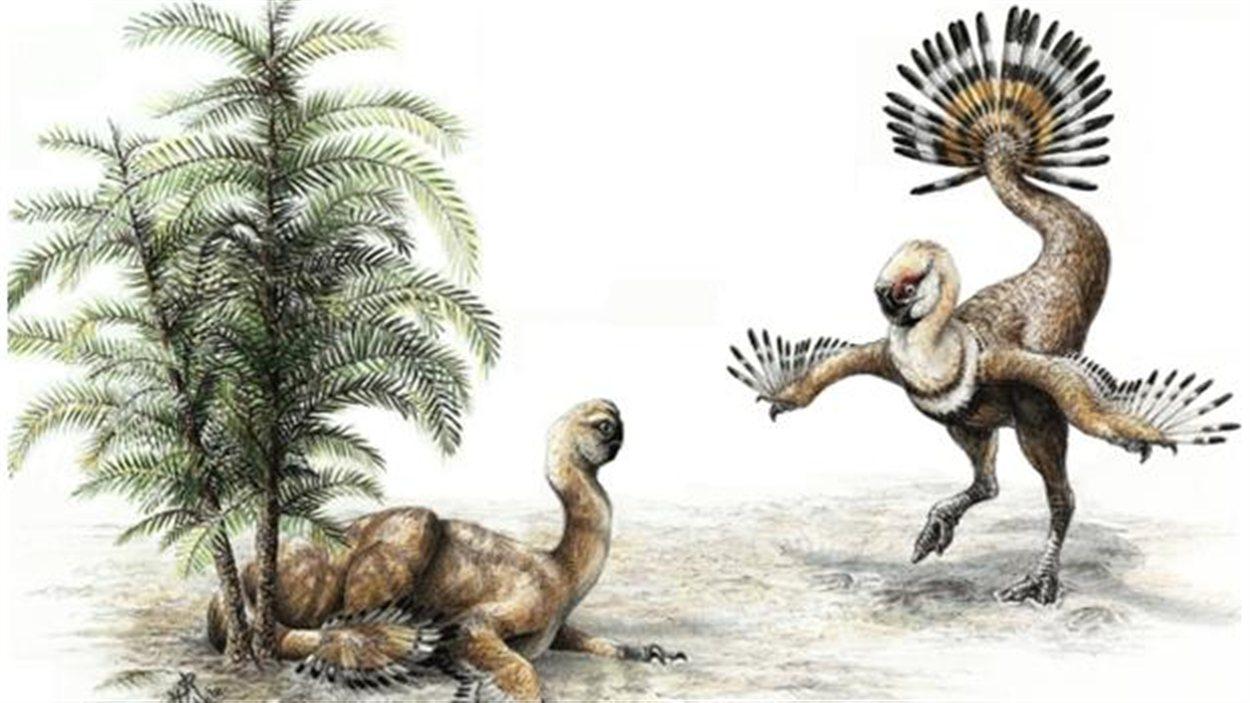 Représentation artisituqe d'un Similicaudipteryx et de sa queue.