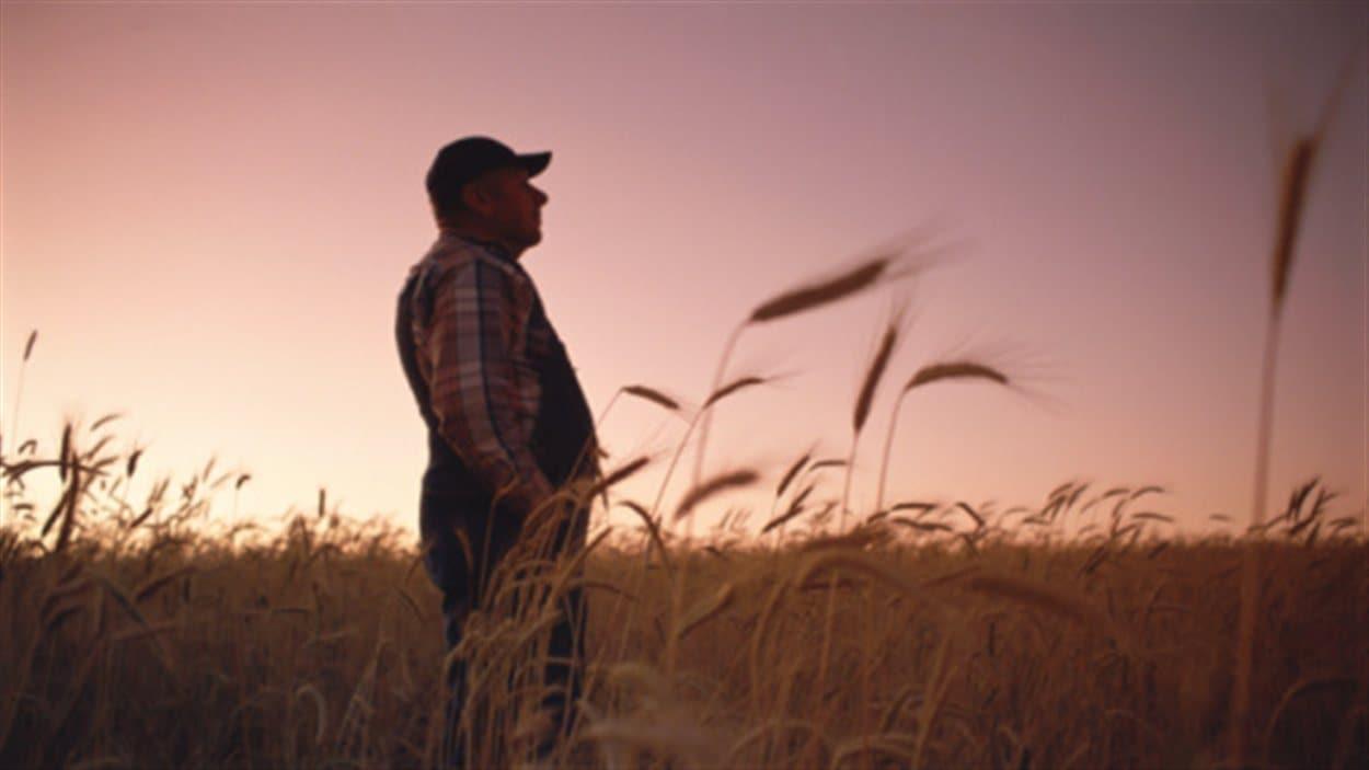 Agriculteur dans un champs