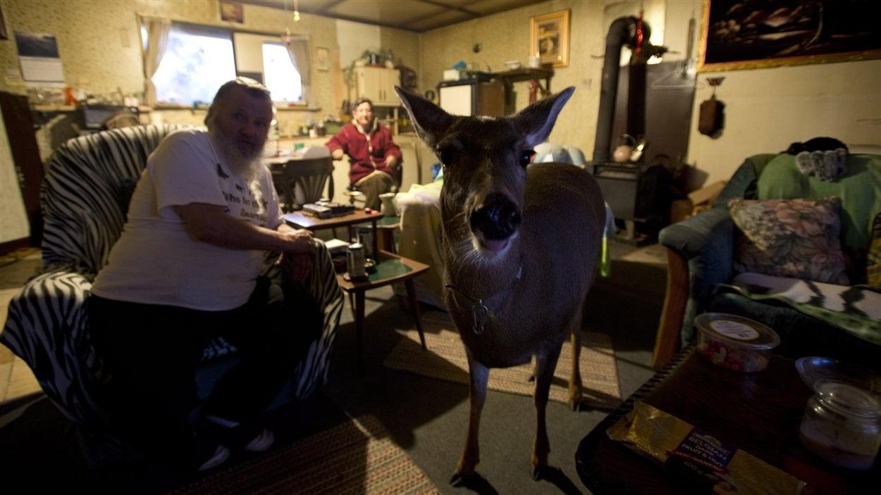 Bimbo le cerf domestique et ses maîtres dans leur résidence de Colombie-Britannique
