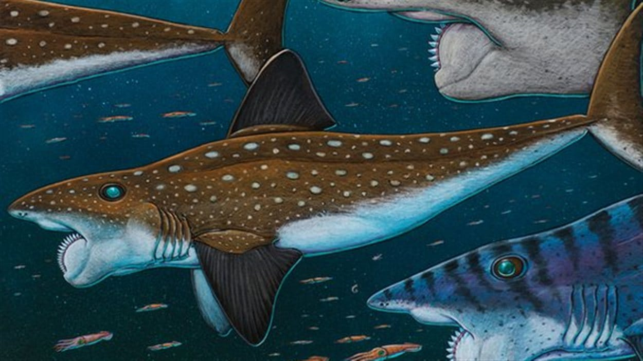 L'helicoprion