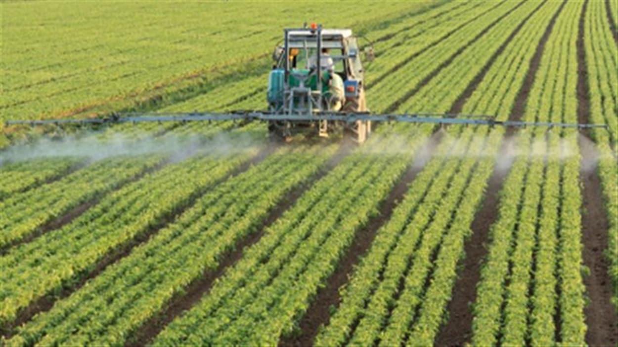 pesticides_aliments