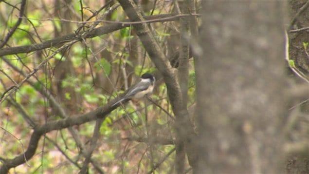 Un oiseau dans un arbre