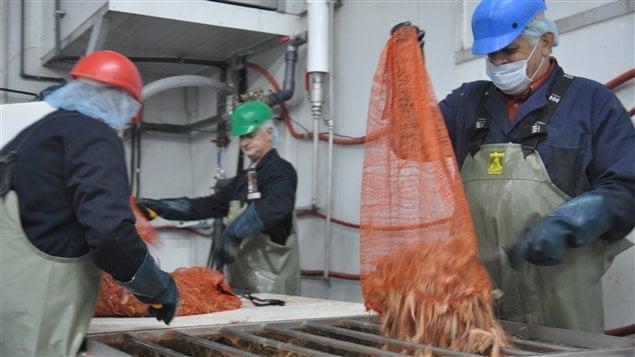 Les crevettes arrivent à l'usine des Pêcheries Marinard