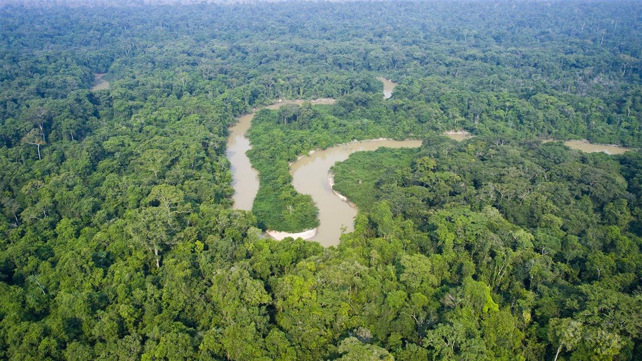 La for t amazonienne compte 390 milliards d arbres de 16 for Agence format paysage