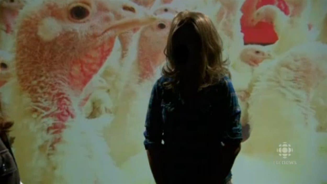 L'employée de Hybrid Turkeys et militante pour Mercy for animals en entrevue à l'émission Marketplace de CBC
