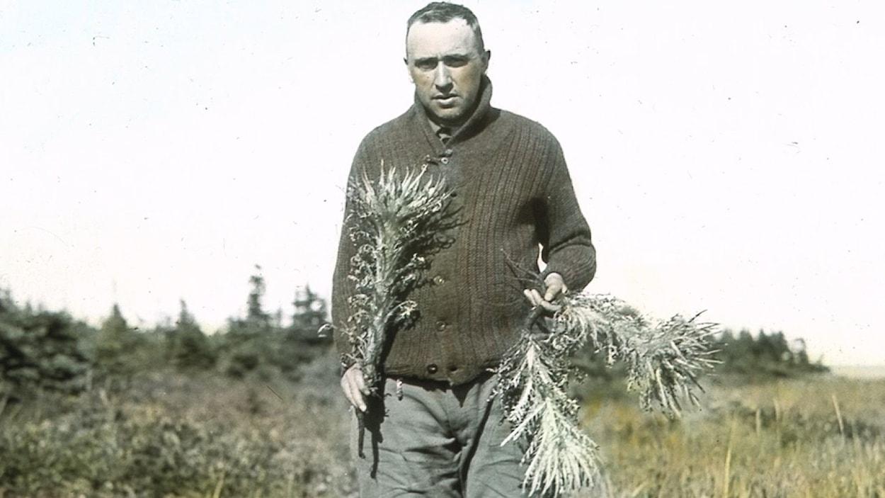 Conrad Kirouac (1885-1944), devenu en entrant en religion le frère Marie-Victorin, reconnut le chardon de Mingan en tant qu'espèce distincte.