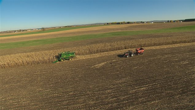 La récolte dans un champ