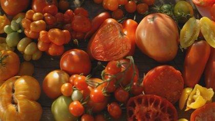 triomphe de la tomate