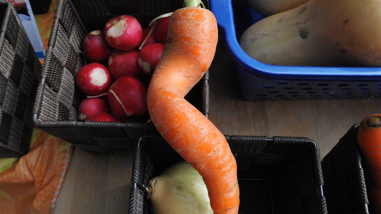 Une carotte moche qui a trouvé preneur.