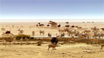 Le Kalahari.