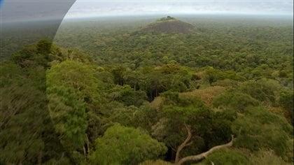 La canopée dune forêt de l'Afrique de l'Est.