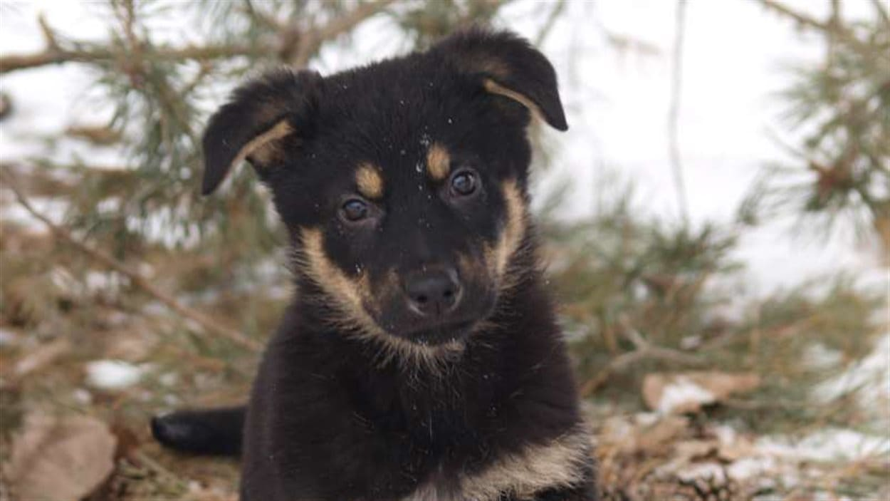 Dix recrues canines de la GRC à la recherche d'un nom en