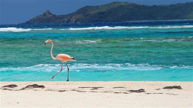 Une plage des îles Vierges britanniques