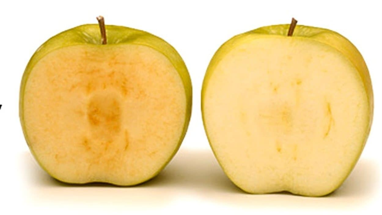 La pomme Arctique, modifiée génétiquement, à droite, ne brunit pas comme la pomme conventionelle de gauche