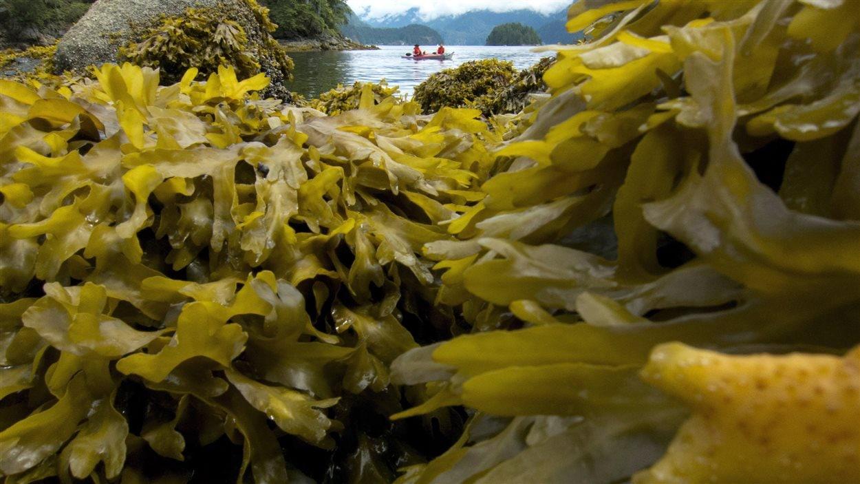 Algues (archives)