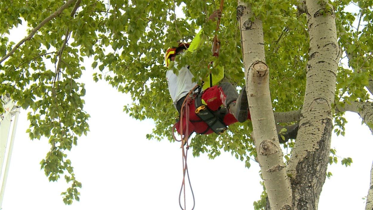L'arboriste-grimpeur Jean-Mathieu Daoust grimpe dans un arbre, le 9 mai 2015 à Calgary.