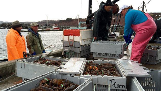 Des pêcheurs de homards près d'Antigonish en Nouvelle-Écosse