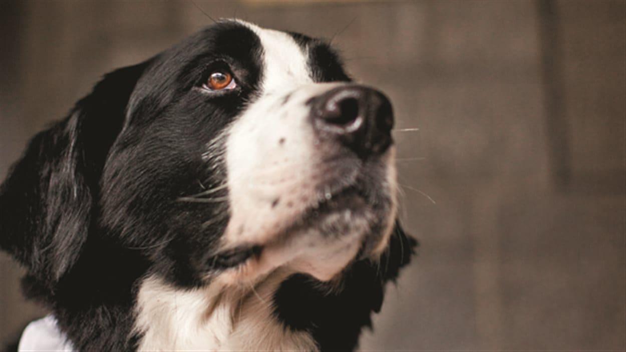 Le chien Santol est mort la semaine dernière.