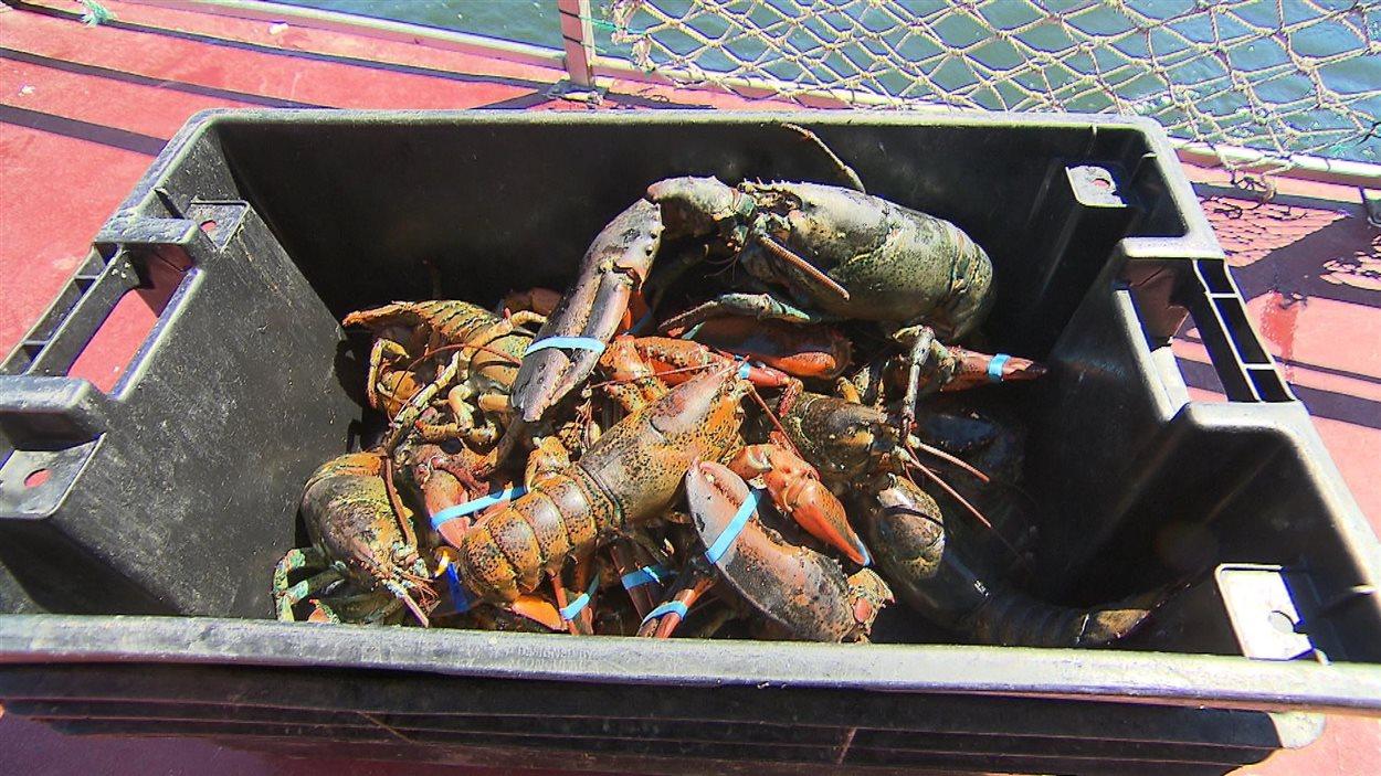 Pêche au homard dans le secteur de Sept-Îles