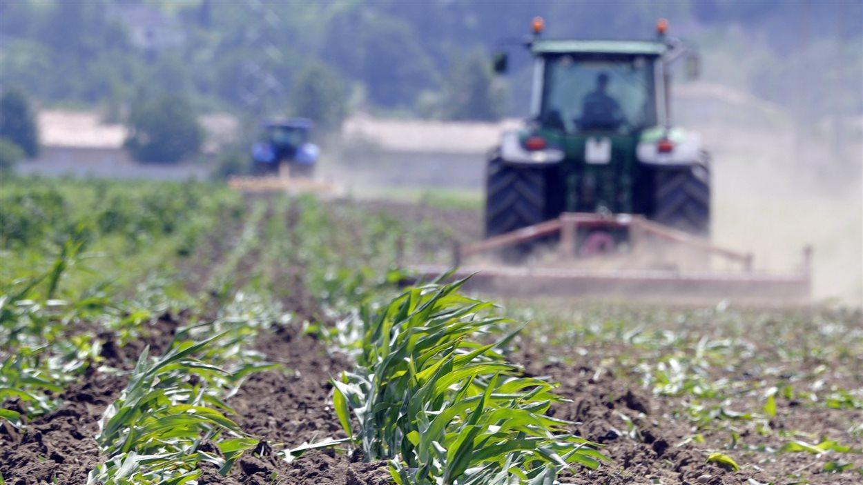Канадские фермеры массово отказываются от выращивания бобовых