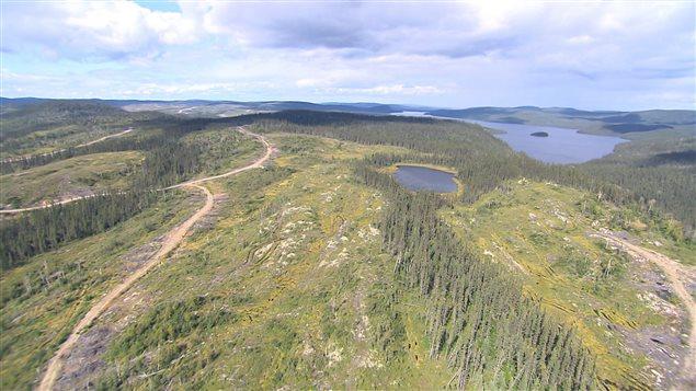 Lacs et arbres