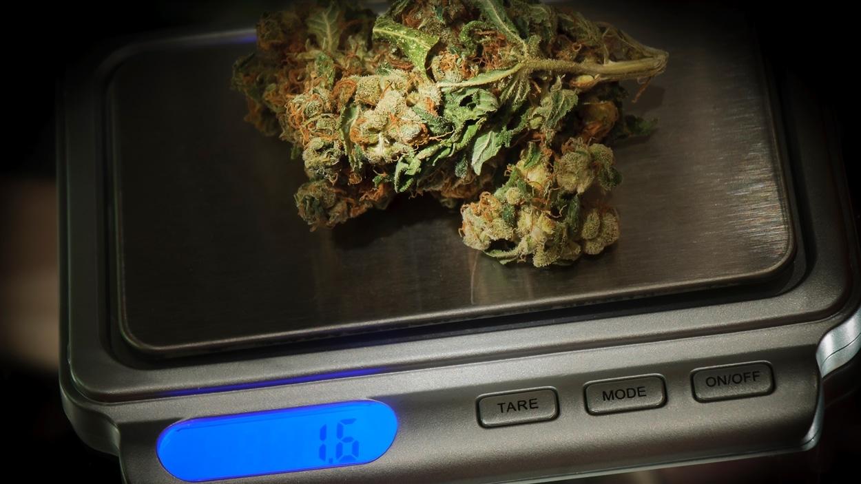 Des feuilles de marijuana sur une balance