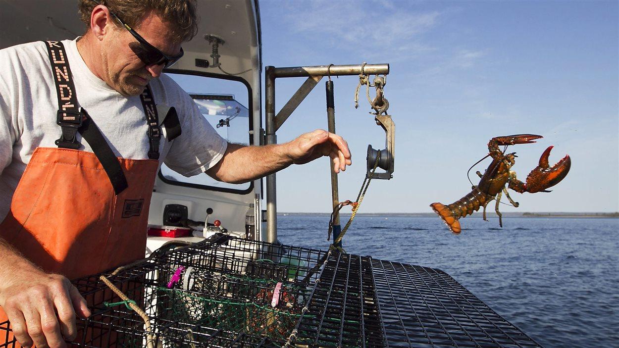Un pêcheur de homards relâche une prise.