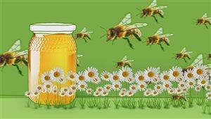 Capsule chiffrée sur le miel
