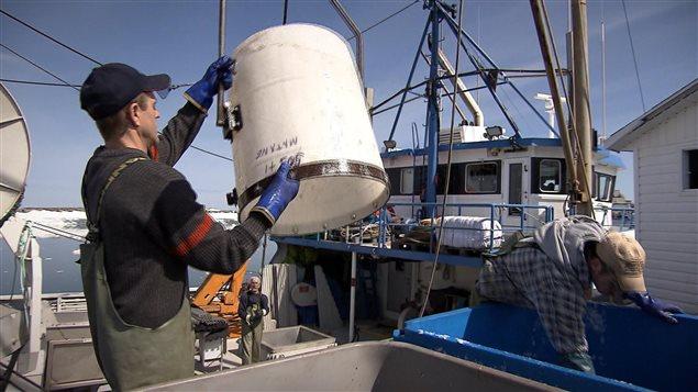Pêcheurs au travail. Débarquement à quai.