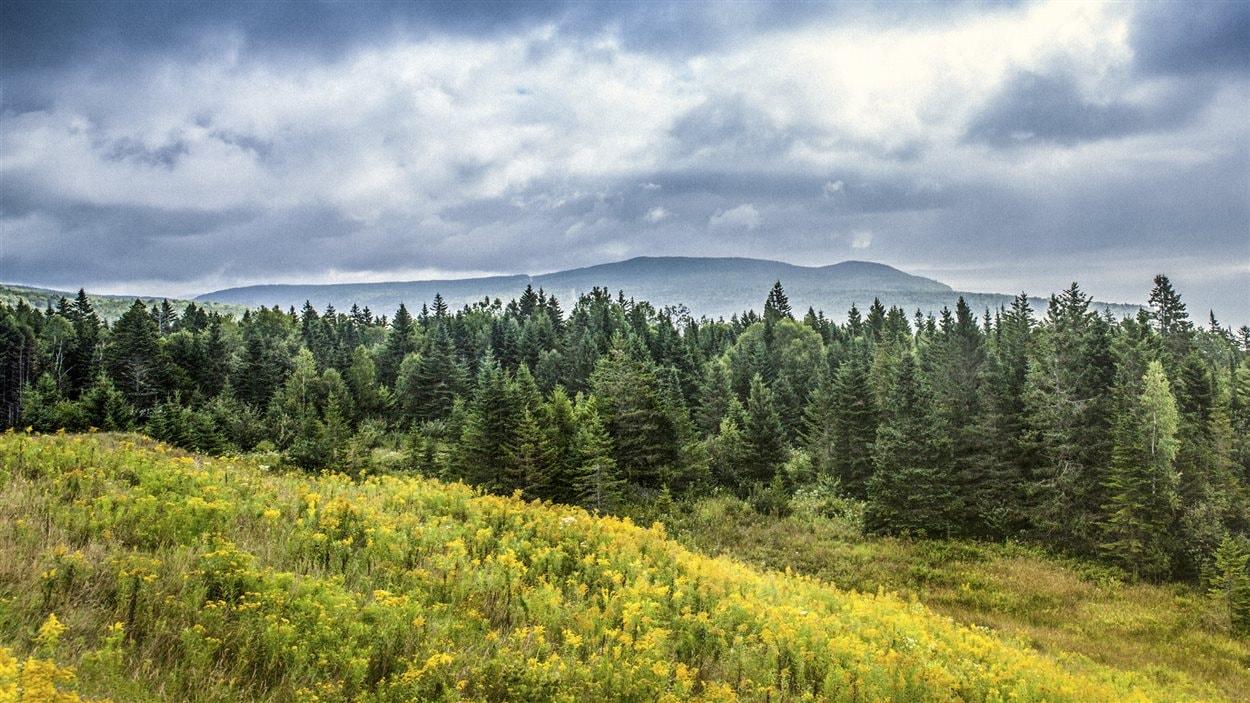 La forêt boréale