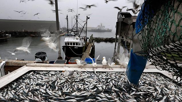 La pêche devra s'adapter aux changements climatiques