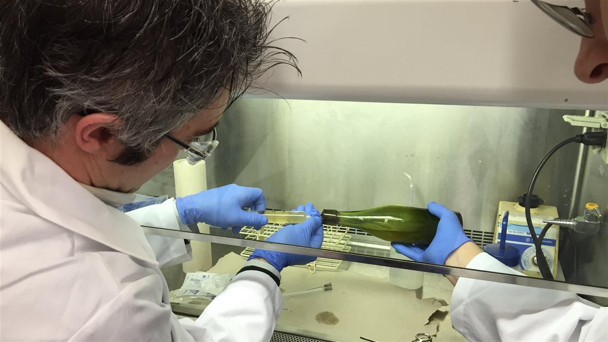 Les chercheurs de l'Université Dalhousie extraient de la bière de la bouteille à l'aide d'une seringue.