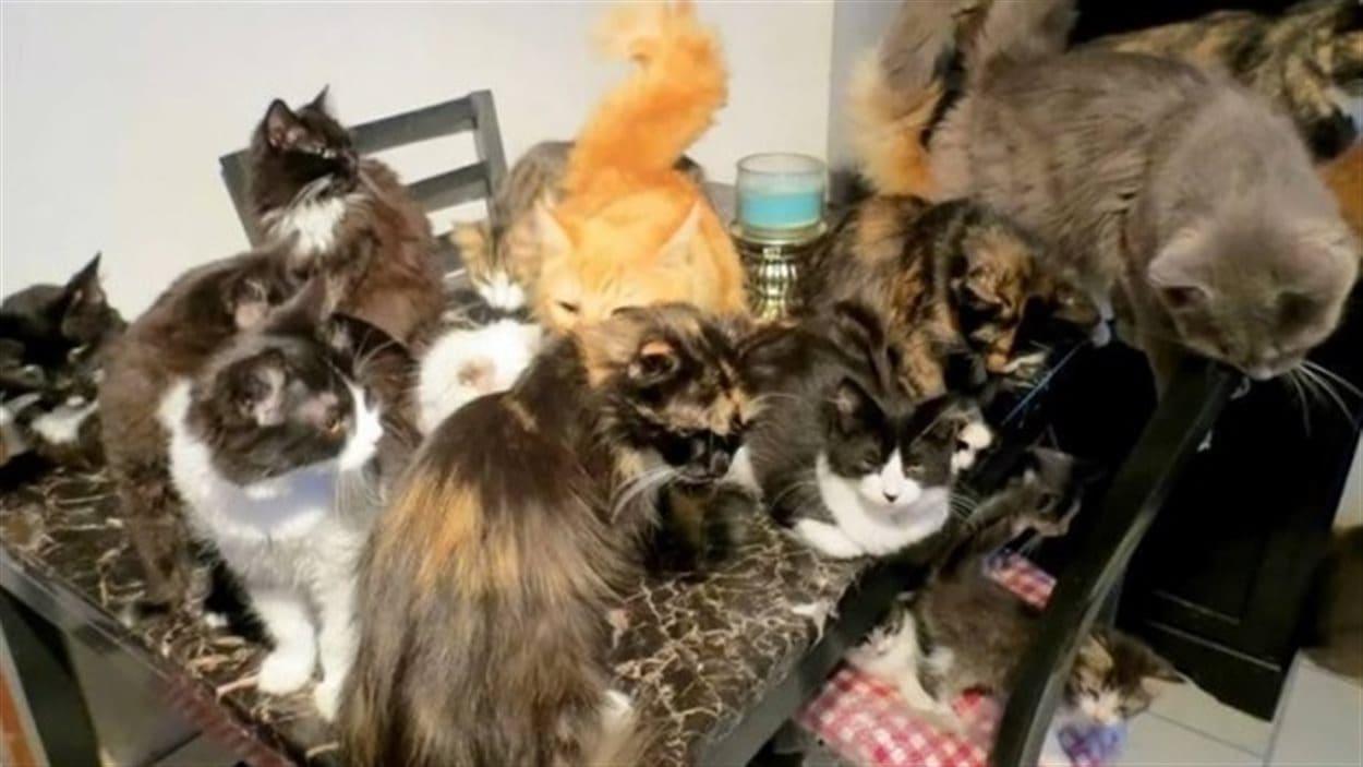 La maison de Florence Taker à Cox Cove, sur la côte ouest de Terre-Neuve, était littéralement envahie par des chats.