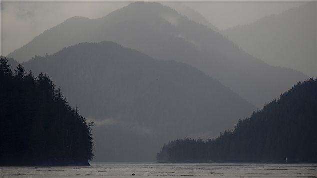 La forêt pluviale du Grand Ours en Colombie-Britannique est la plus grande forêt de ce type encore intacte au monde.