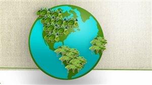 Capsule chiffrée sur la déforestation