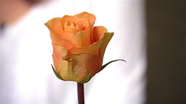 La rose que lui a offerte le policier Kyle Isenor.