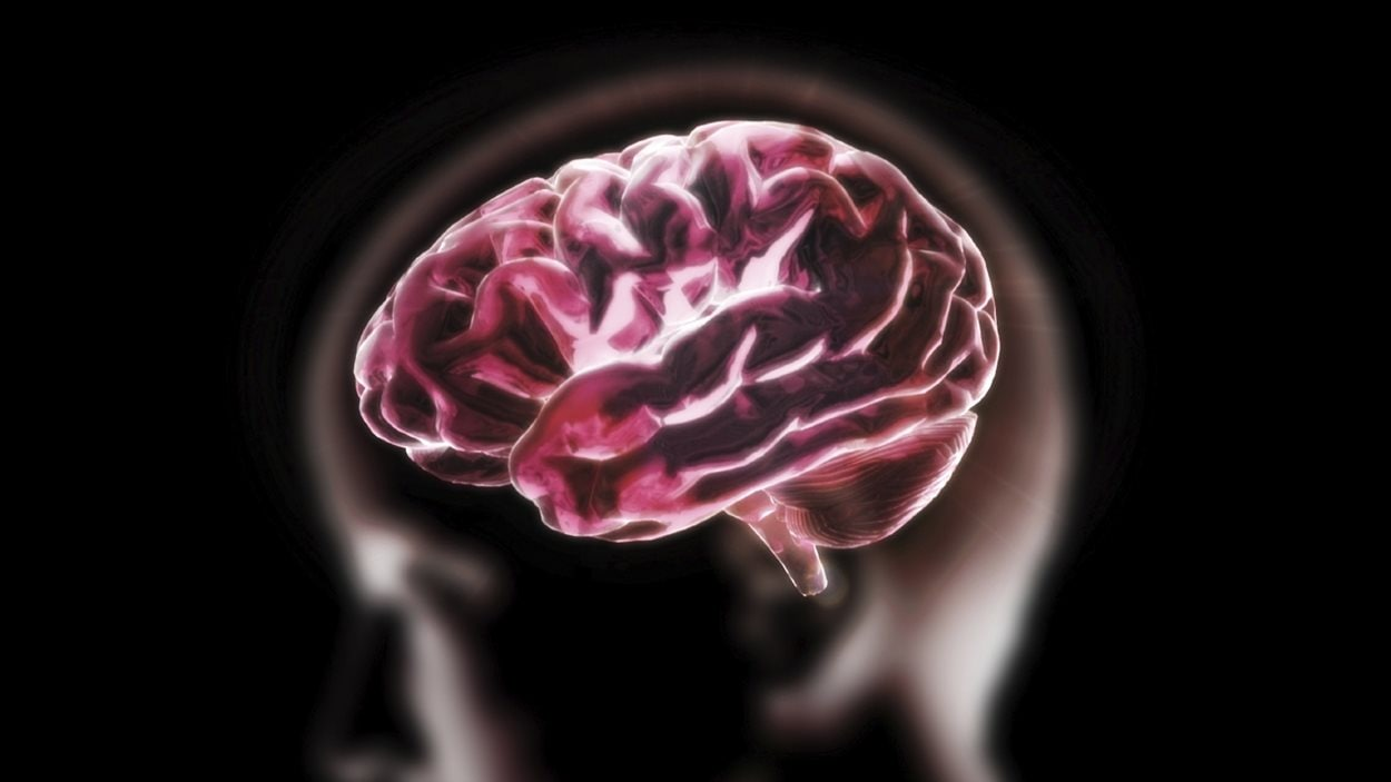 Représentation d'un cerveau humain