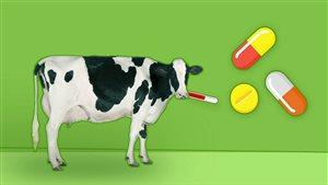 L'utilisation des antibiotiques dans les élevages