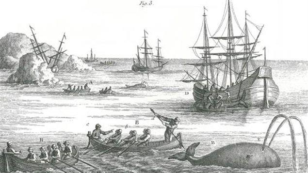 Les harponneurs approchaient très près de la baleine