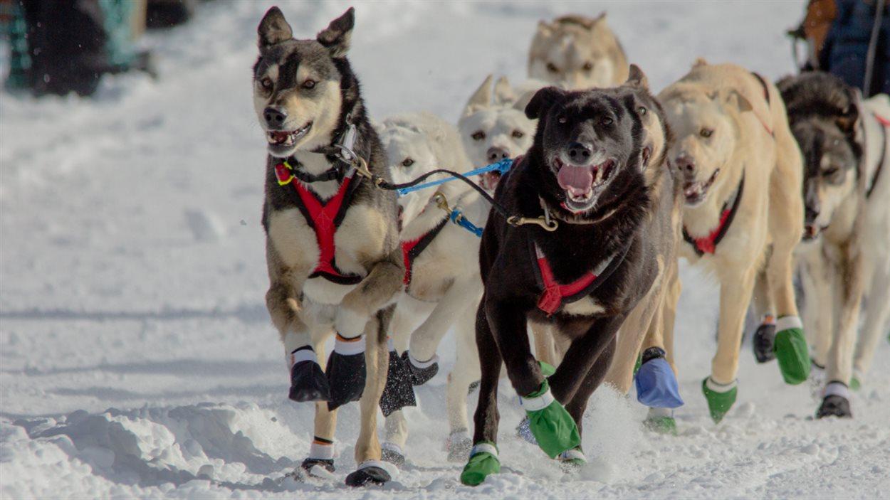 Course de traîneaux à chien au Défi Taïga 200