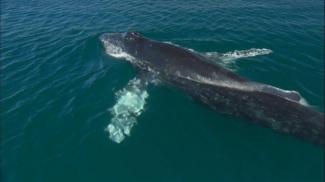 Une baleine à la surface de l'eau