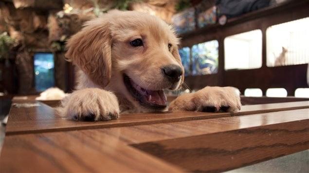 Ottawa de nouvelles r gles l tude pour les - Animalerie a paris chien ...