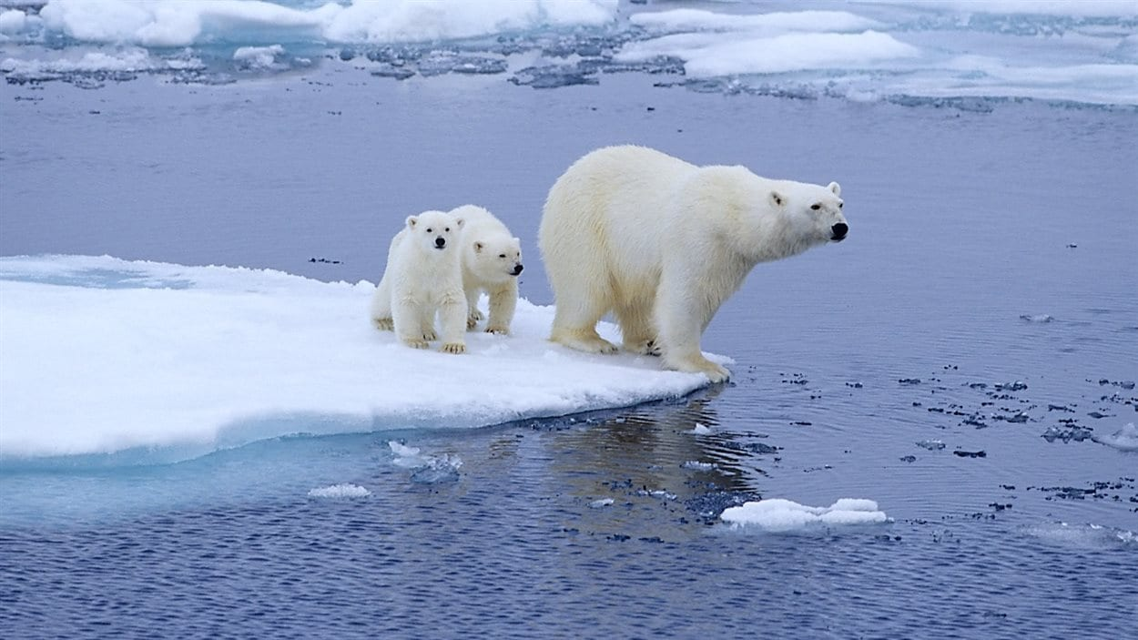 Výsledek obrázku pro global warming