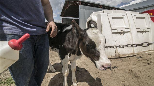 Justin Alary, producteur laitier à Luskville