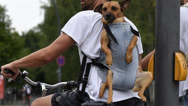 Un cycliste et son chien à Berlin en août 2014.