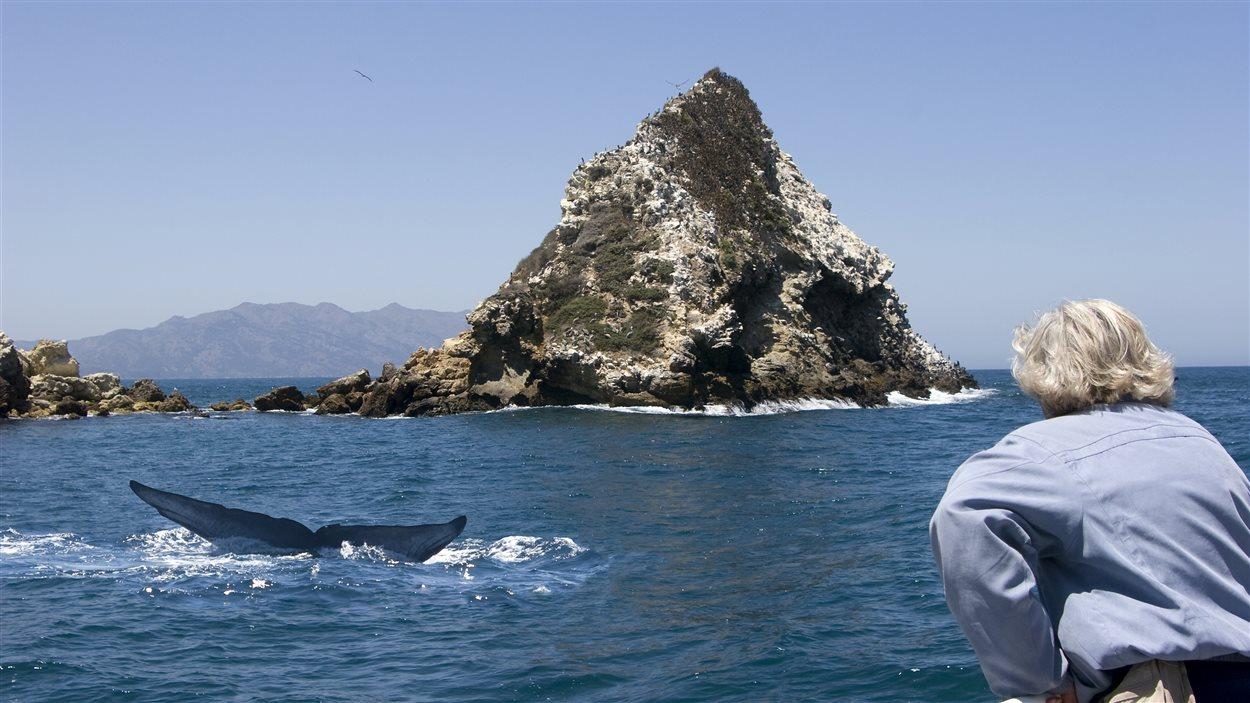 Observation des baleines bleues